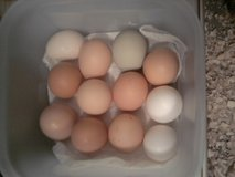 Fresh Eggs in Aurora, Illinois